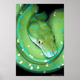 Green Tree Python Print