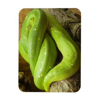 Green Tree Python Rectangle Magnet