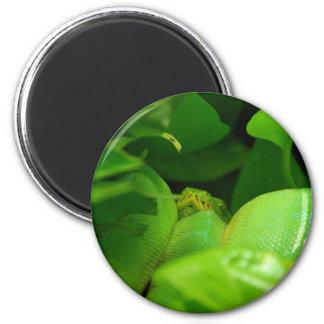 green tree python snake magnet