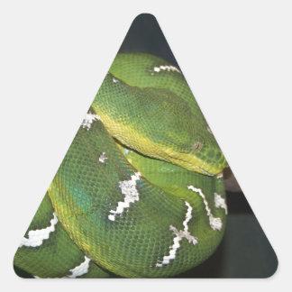 Green Tree Python Triangle Sticker