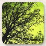 Green Tree Silhouette Cork Coaster set