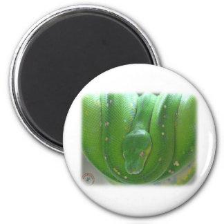 Green Tree Snake 9Y195D-028 Fridge Magnet