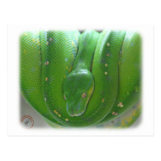 Green Tree Snake 9Y195D-028 Postcard