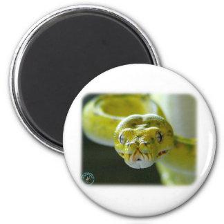 Green Tree Snake 9Y195D-033 Magnet