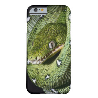 Green tree snake emerald boa in Bolivia Barely There iPhone 6 Case