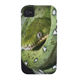Green tree snake emerald boa in Bolivia iPhone 4/4S Covers