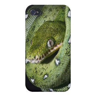 Green tree snake emerald boa in Bolivia Case For iPhone 4