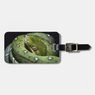 Green tree snake emerald boa in Bolivia Tags For Bags
