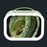 """Green tree snake emerald boa in Bolivia Lunch Box<br><div class=""""desc"""">green tree snake emerald boa in the Bolivian rainforest strangler serpent of amazon rain forest at night on branch endangered reptile nocturnal animal treesnake black background copy space &#169; and &#174; Bigstock&#174; - All Rights Reserved.</div>"""