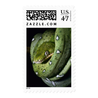 Green tree snake emerald boa in Bolivia Postage