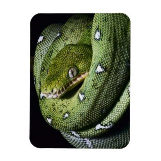 Green tree snake emerald boa in Bolivia Magnets