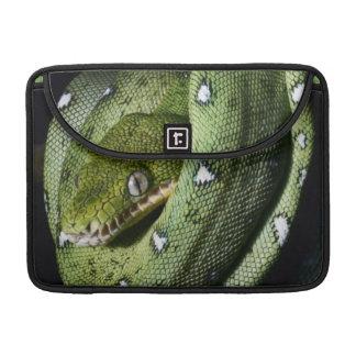 Green tree snake emerald boa in Bolivia Sleeve For MacBook Pro