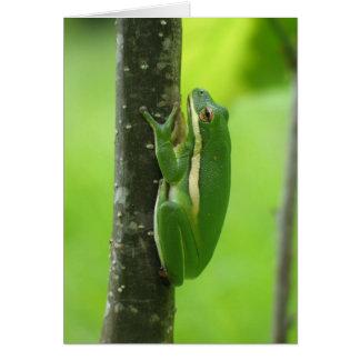 Green Treefrog Card