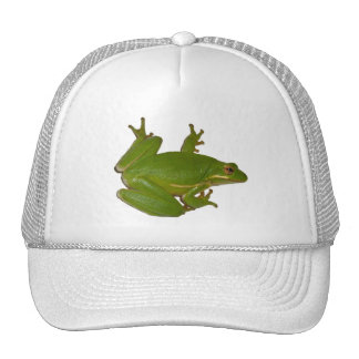 Green Treefrog Hat