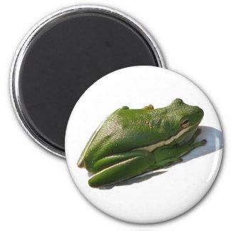 Green Treefrog, Hyla cinera 2 Inch Round Magnet