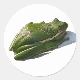 Green Treefrog, Hyla cinera Classic Round Sticker