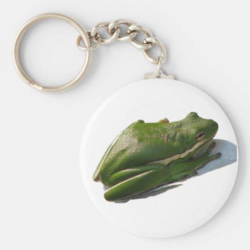 Green Treefrog, Hyla cinera Key Chains