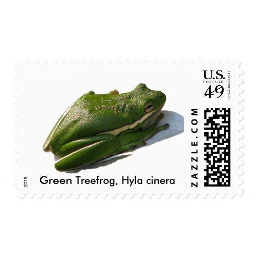 Green Treefrog, Hyla cinera Stamps