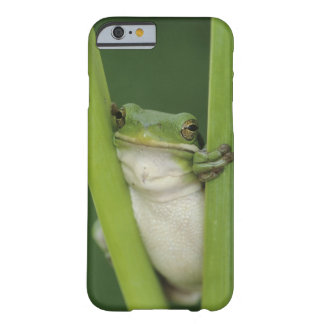 Green Treefrog, Hyla cinerea, adult, Lake Barely There iPhone 6 Case