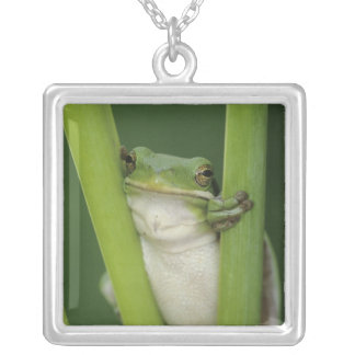 Green Treefrog, Hyla cinerea, adult, Lake Square Pendant Necklace