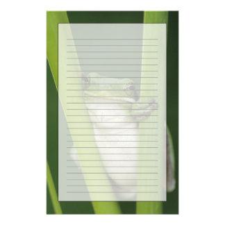 Green Treefrog, Hyla cinerea, adult, Lake Stationery