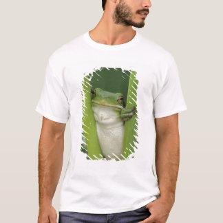 Green Treefrog, Hyla cinerea, adult, Lake T-Shirt