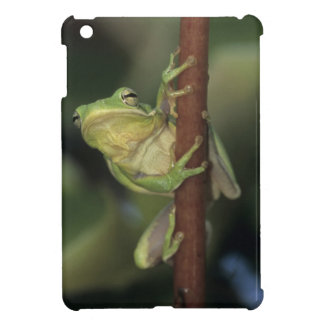 Green Treefrog, Hyla cinerea, adult on yellow Case For The iPad Mini
