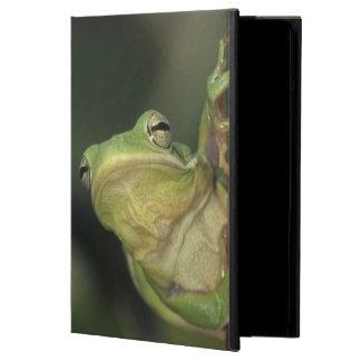 Green Treefrog, Hyla cinerea, adult on yellow iPad Air Cover