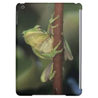 Green Treefrog, Hyla cinerea, adult on yellow iPad Air Covers