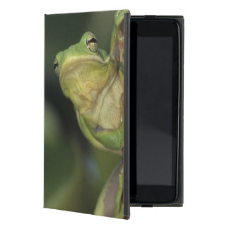 Green Treefrog, Hyla cinerea, adult on yellow iPad Mini Covers