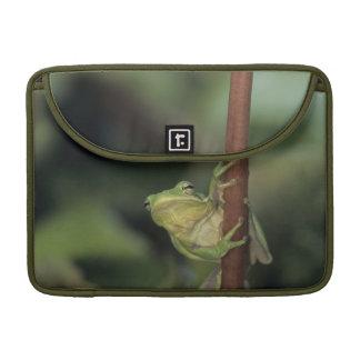 Green Treefrog, Hyla cinerea, adult on yellow Sleeves For MacBooks