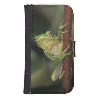 Green Treefrog, Hyla cinerea, adult on yellow Samsung S4 Wallet Case