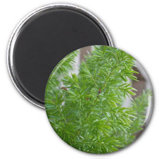 Green Trees 2 Inch Round Magnet