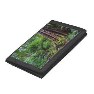 Green trees at Great Otway rainforest Australia Trifold Wallet