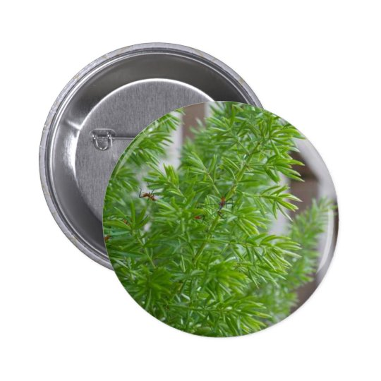 Green Trees Button