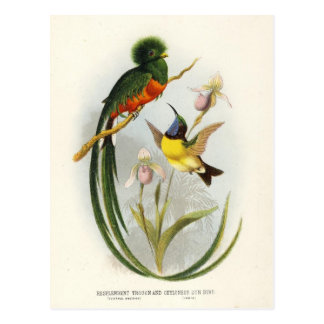 green trogon and hummingbird postcard