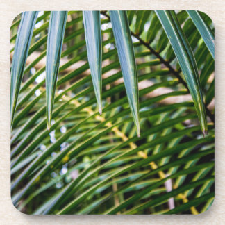 Green Tropical Leaves Beverage Coasters