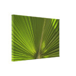 Green Tropical Palm Frond Canvas Print