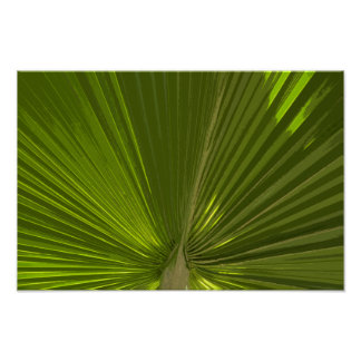 Green Tropical Palm Tree Frond Poster