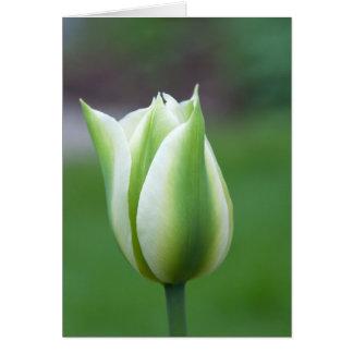 Green Tulip Greeting Card