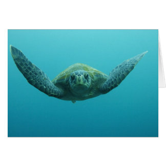 Green Turtle (Chelonia mydas agassisi), Central Card