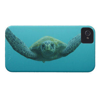 Green Turtle (Chelonia mydas agassisi), Central Case-Mate iPhone 4 Case