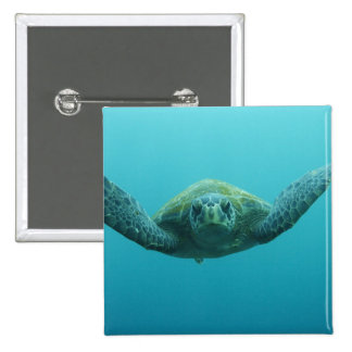 Green Turtle (Chelonia mydas agassisi), Central Pinback Button