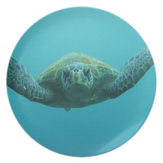 Green Turtle (Chelonia mydas agassisi), Central Plate