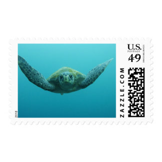Green Turtle (Chelonia mydas agassisi), Central Postage