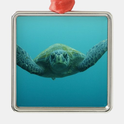 Green Turtle (Chelonia mydas agassisi), Central Square Metal Christmas Ornament
