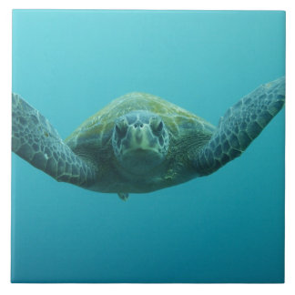 Green Turtle (Chelonia mydas agassisi), Central Large Square Tile