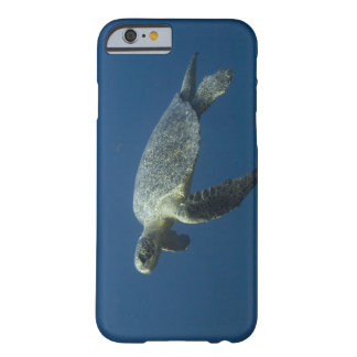 Green Turtle (Chelonia mydas agassisi) off Wolf Barely There iPhone 6 Case