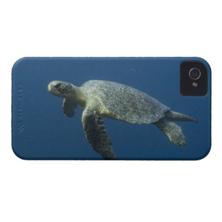 Green Turtle (Chelonia mydas agassisi) off Wolf iPhone 4 Cases
