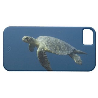 Green Turtle (Chelonia mydas agassisi) off Wolf iPhone SE/5/5s Case